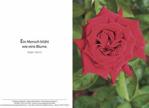 Bibelspruchkarte: Rose