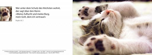 Bibelspruchkarte: Kätzchen