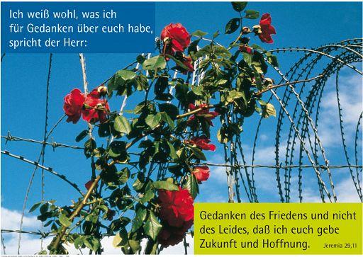 "Schaukastenposter 3 ""Rosen"""