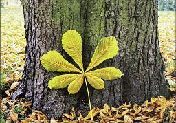 10erSet Ewigkeitskarte Baum