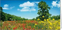 Leipziger Panoramakarte: Laub und Blüte