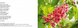 Leipziger Karten: Kastanie