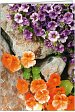 Patenurkunde: Mauerblumen